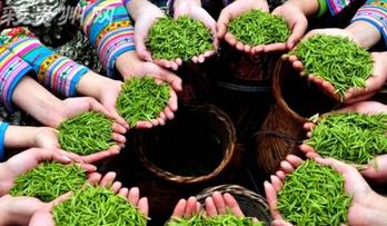 贵州着力提高农产品标准化、规模化、品牌化水平,开拓市场、提高效益